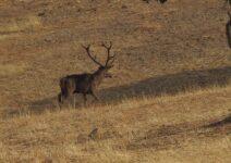 sector de la caza