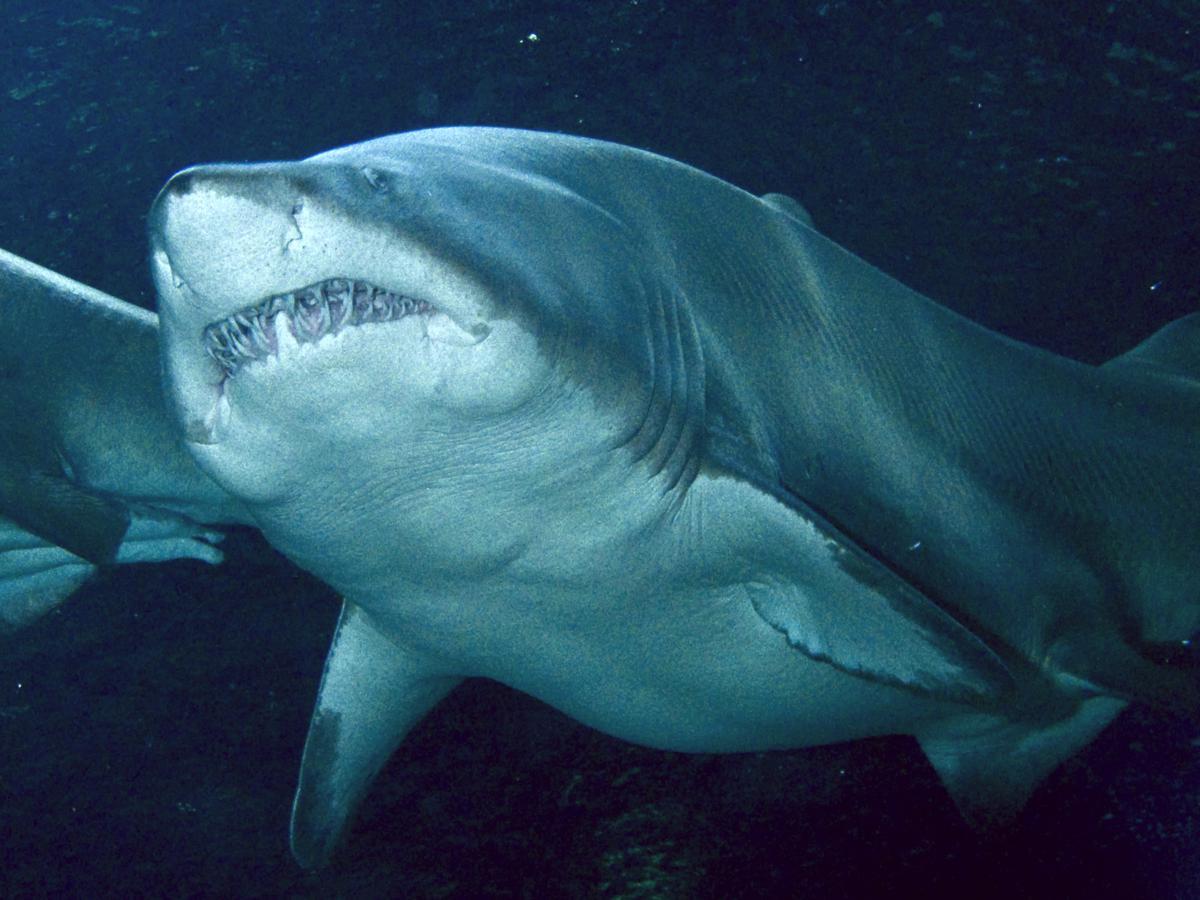 «Дайвинг с акулами» / Океанографический парк / Валенсия