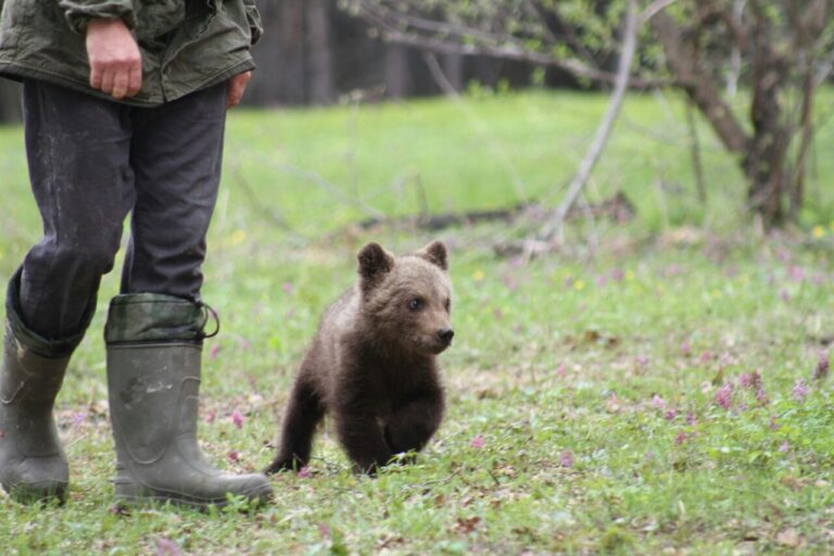How a St. Petersburg-based writer rescued a Siberian bear cub
