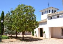 Vineyard El Guijoso