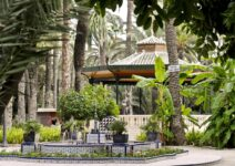 7 suggestions to enjoy the Palmeral of Elche