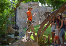 Биопарк Валенсии предлагает больше бесплатных мероприятий