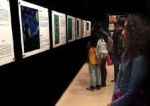 La exposición 'Van Gogh Alive' llega a su ecuador en Alicante con casi 30.000 visitantes