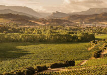 The wine heritage of Navarra
