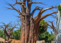 BIOPARC Valencia acoge el encuentro más importante de conservación de la Naturaleza