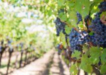 El vino y la responsabilidad social