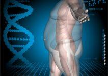 Факторы окружающей среды оказывают большее влияние на пациентов с ожирением, чем генетика